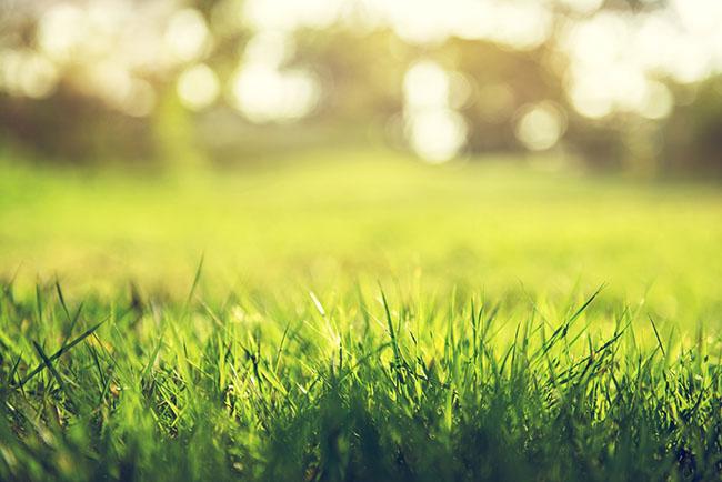 Groeiend gras